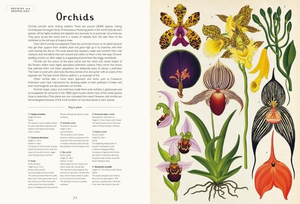pages_from_botanicum_internals_-3_2.jpg